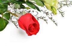 Rotrose auf weißem Hintergrund für Karte oder Buchstaben, Valentinstaggeschenk, Weihnachtsgeschenk, Danksagungs-Tag Lizenzfreie Stockbilder