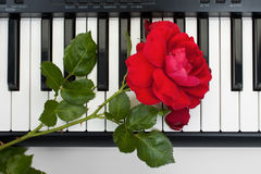 Rotrose, die auf der Tastatur des Digitalpianos, die Spitze liegt lizenzfreies stockfoto