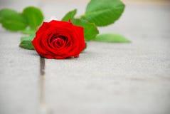 Rotrose, die auf einem Kriegsdenkmal liying ist Stockbilder