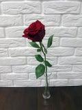 Rotrose lokalisiert in einem Vase Lizenzfreie Stockfotos