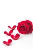 Rotrose mit dem rosafarbenen Blumenblatt Stockbild