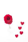 Rotrose mit dem rosafarbenen Blumenblatt Stockfotos