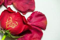 Rote Rose ich liebe dich Lizenzfreie Stockbilder