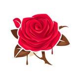 Rotrose mit Schokoladenblättern Lizenzfreie Stockbilder