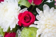 Rotrose und weiße Chrysantheme Lizenzfreies Stockbild