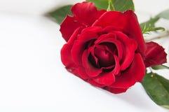 Rotrose und weißes Blatt Papier Lizenzfreies Stockbild
