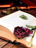 Rotrose verwelkte durch die Seiten eines alten Buches, das von Tim gelb gefärbt wurde Stockbild