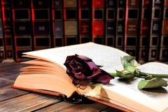 Rotrose verwelkte durch die Seiten eines alten Buches, das von Tim gelb gefärbt wurde Lizenzfreie Stockfotos