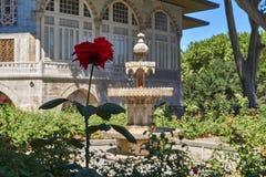 Rotrose vor Brunnen stockfoto