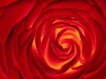 Rotrosenblume, Abschluss oben Lizenzfreie Stockbilder