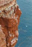Rots bij de Noordzee met vele vogelsverticaal Stock Fotografie