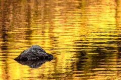 Rots en de gouden bezinningen van het de herfstmeer stock foto