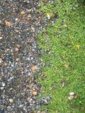 Rots en gras Stock Afbeeldingen