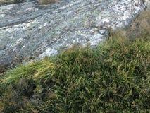 Rots en gras in aard royalty-vrije stock afbeelding