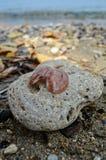 Rots en shell in het strand van Korfu Royalty-vrije Stock Foto's