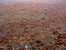 Rots in het meer Royalty-vrije Stock Afbeelding