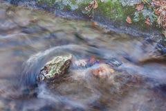 Rots in het midden van een stroom Royalty-vrije Stock Foto