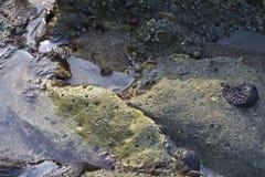 Rots in het water Stock Fotografie
