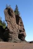 Rots met boom op bovenkant Royalty-vrije Stock Foto's