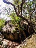 Rots met een boom Stock Foto