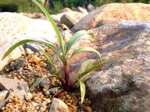 Rots met groen gras Royalty-vrije Stock Fotografie