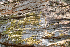 Rots met groen korstmos Stock Foto's