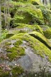 Rots met mos royalty-vrije stock afbeeldingen