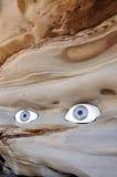 Rots met ogen Stock Fotografie