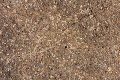 Rots met shells textuur Stock Foto