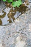 Rots op de achtergrond van het rivierwater Royalty-vrije Stock Afbeeldingen