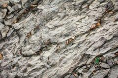 Rots, steen Stock Afbeeldingen