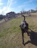 Rotsachtig bij het hondpark Royalty-vrije Stock Foto