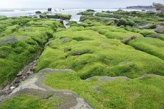 Rotsachtig die strand door zeewier wordt behandeld royalty-vrije stock foto
