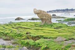 Rotsachtig die strand door zeewier wordt behandeld Stock Afbeeldingen