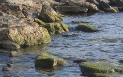 Rotsachtig die strand met algen wordt behandeld Stock Foto's