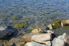 Rotsachtig die strand met algen wordt behandeld Stock Afbeelding