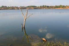 Rotsachtig meer met steen en dode boom Royalty-vrije Stock Foto