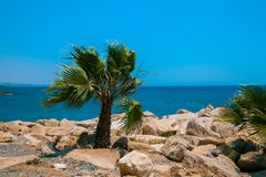 Rotsachtig strand met palm Stock Foto's