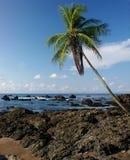 Rotsachtig strand met palm Stock Afbeelding