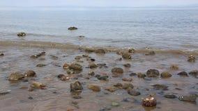 Rotsachtig strand op Coromandel stock videobeelden