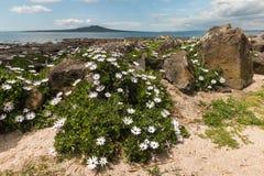 Rotsachtig strand in Takapuna Royalty-vrije Stock Foto's
