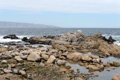 Rotsachtig strand in Vina del Mar Stock Afbeeldingen