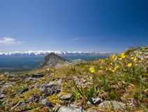 Rotsachtige bergen en bloemen stock afbeeldingen