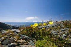 Rotsachtige bergen en bloemen royalty-vrije stock afbeeldingen