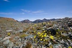 Rotsachtige bergen en bloemen stock foto