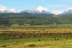 Rotsachtige bergen en landbouwbedrijven stock afbeeldingen