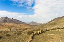 Rotsachtige bergen van Furteventura royalty-vrije stock afbeeldingen