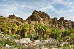 Rotsachtige die berghelling met palmen wordt gevoerd Stock Afbeeldingen