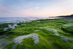 Rotsachtige die kust met groene algen in de vroege ochtend met bergmeningen wordt behandeld Royalty-vrije Stock Afbeeldingen