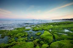 Rotsachtige die kust met groene algen in de vroege ochtend met bergmeningen wordt behandeld Royalty-vrije Stock Afbeelding